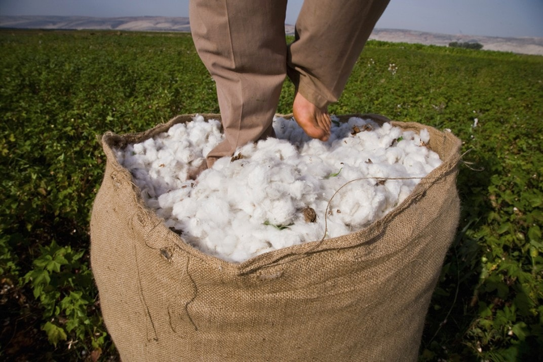 Cotton stock at all-time high